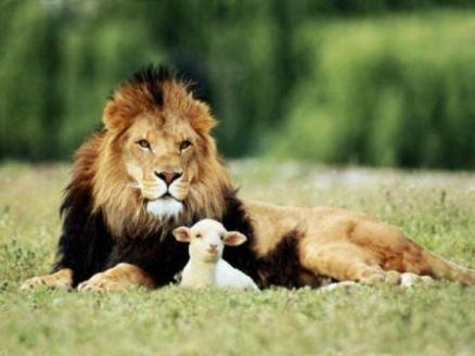 lion-and-lamb.jpg?w=438